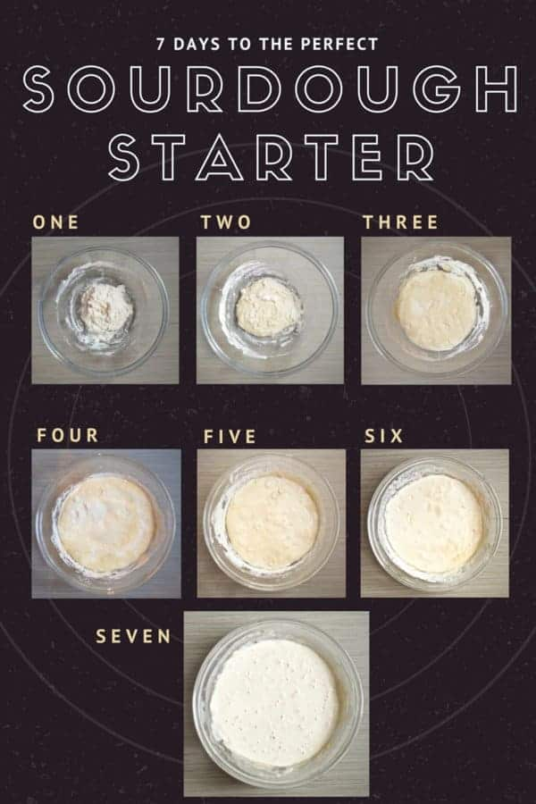 Sourdough Starter Tutorial