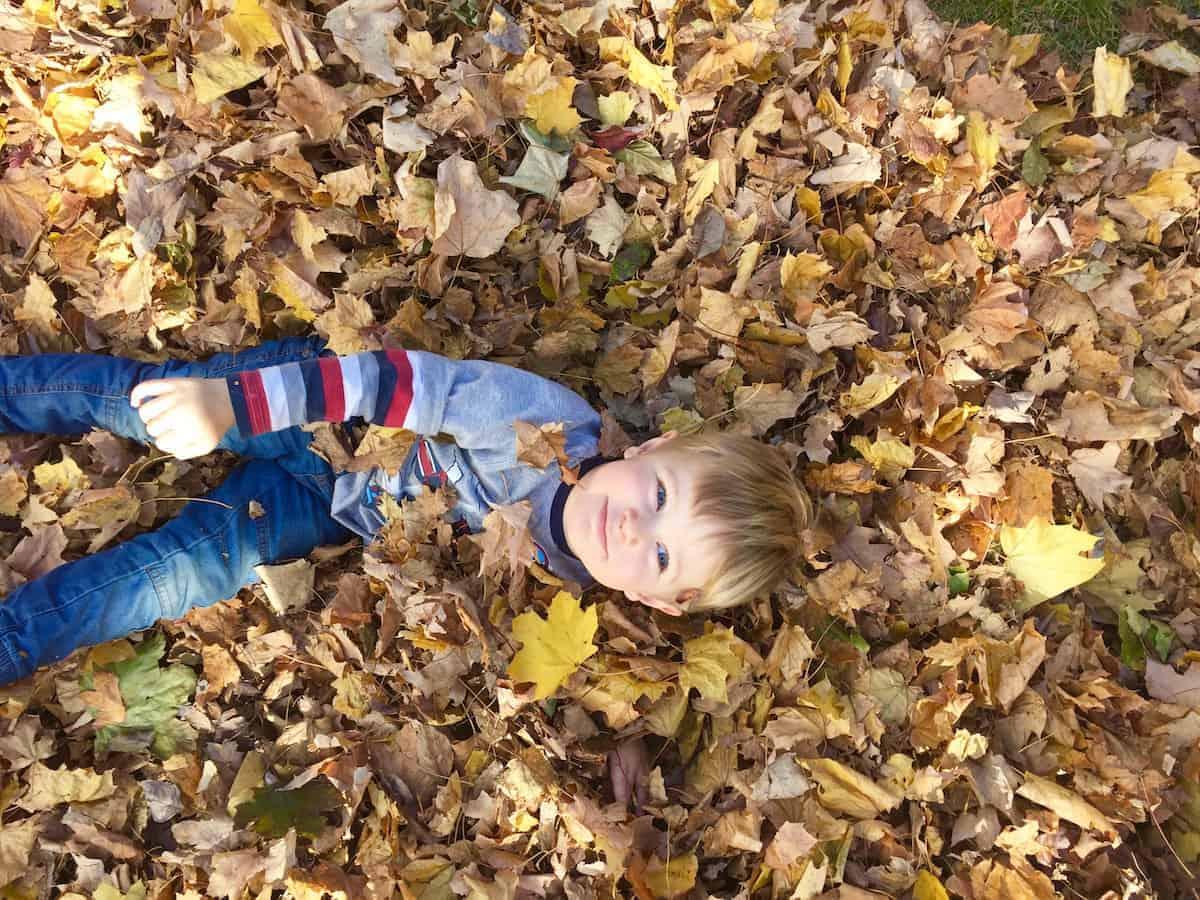 judah-leaves
